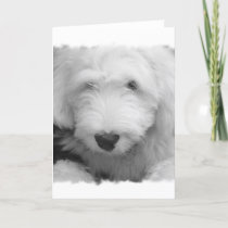 Sheep Dog Photo Greeting Card