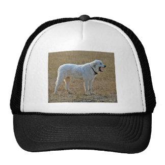 Sheep dog trucker hat
