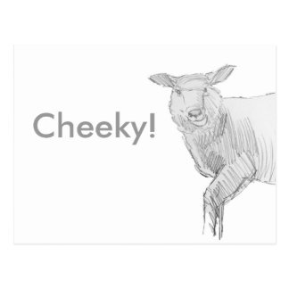 sheep drawing pencil sketch postcard
