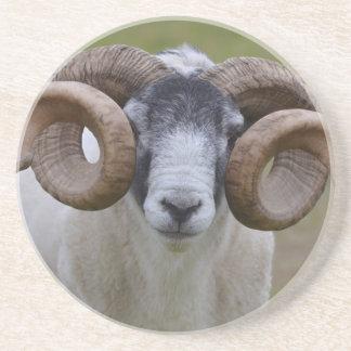 Sheep Drink Coasters