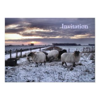 Sheep - Dutch Winter Card