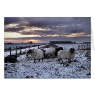 Sheep - Dutch Winter Card