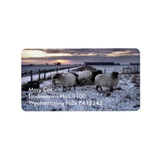 Sheep - Dutch Winter Label
