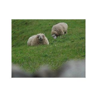 Sheep Enclosure Canvas Print