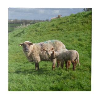 Sheep Family Ceramic Tile