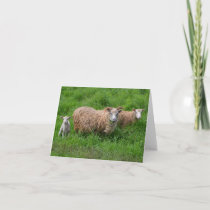 Sheep Family Note Card