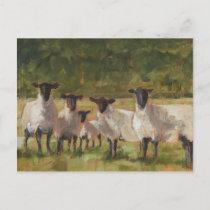 Sheep Family Postcard