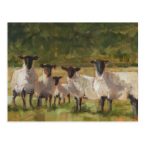 Sheep Family Postcard