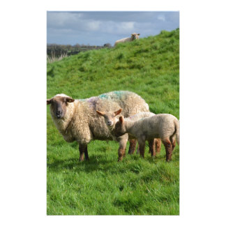 Sheep Family Stationery