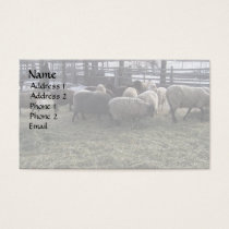 Sheep Feeding Time Business Card