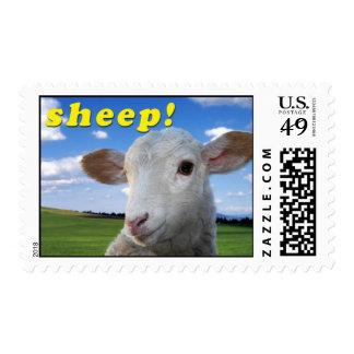 Sheep! first class stamp