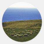 Sheep Flock, Christchurch, South Island Sticker
