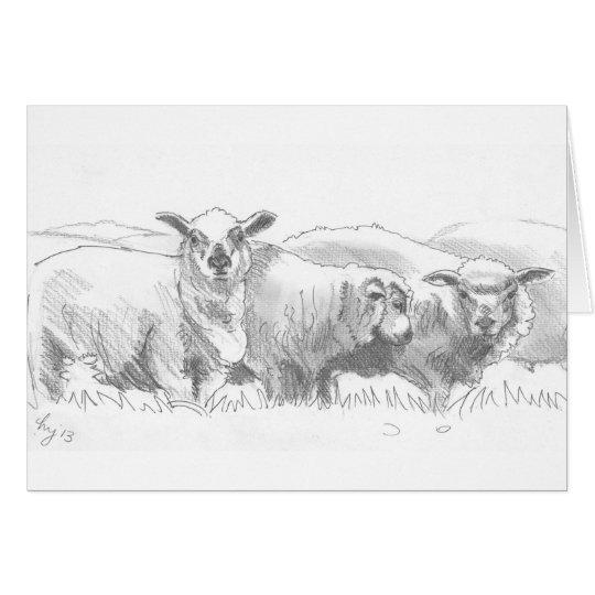 Sheep Flock Drawing Card