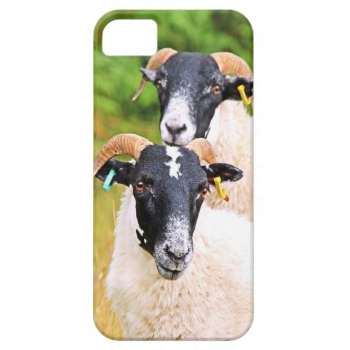 sheep Forever Friends iPhone 5 Case