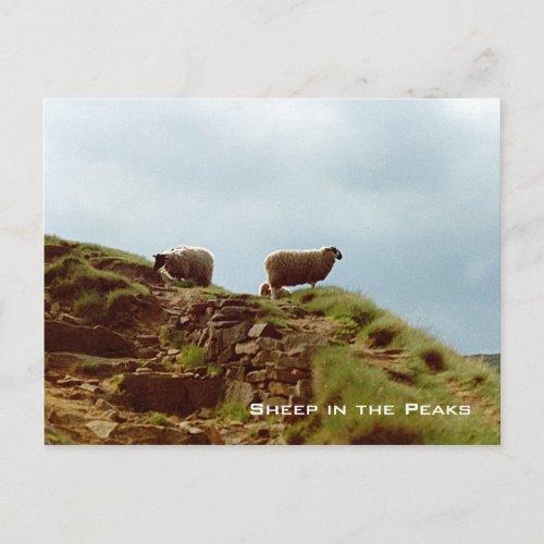 Sheep graze Peak District UK postcard postcard
