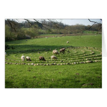 Sheep Grazing a Labyrinth - Calmness Card