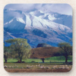 Sheep grazing below the snow-capped Harris Coasters