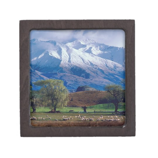 Sheep grazing below the snow-capped Harris Gift Box