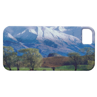 Sheep grazing below the snow-capped Harris iPhone SE/5/5s Case