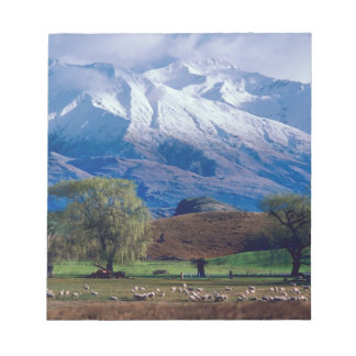 Sheep grazing below the snow-capped Harris Note Pad