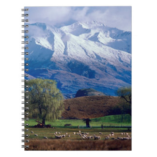 Sheep grazing below the snow-capped Harris Notebook