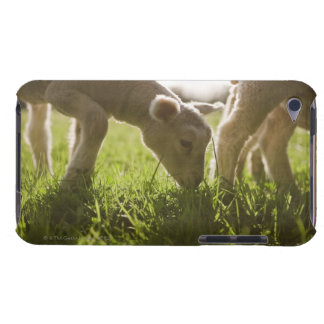 Sheep Grazing in Grass Barely There iPod Cover