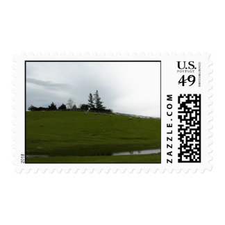 Sheep Grazing in Green Pasture Near Pond Stamp