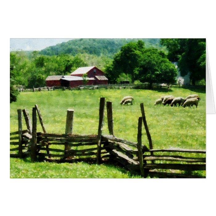 Sheep Grazing in Pasture Card
