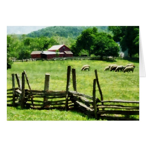 Sheep Grazing in Pasture Greeting Card