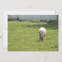 Sheep Grazing  Invitation
