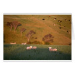 Sheep grazing lush green pasture New Zealand Greeting Card