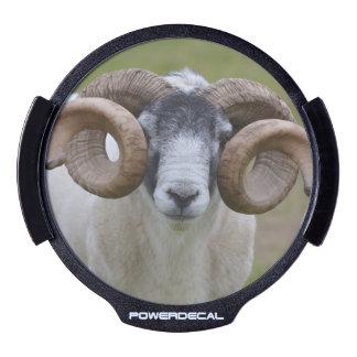 Sheep LED Window Decal
