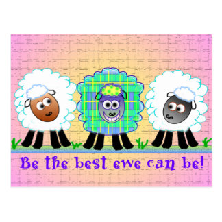 Sheep Greeting Cards Postcard