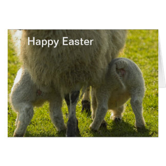 Sheep Happy Easter Card
