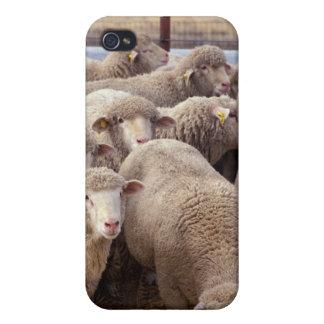 Sheep Herd iPhone 4/4S Cases