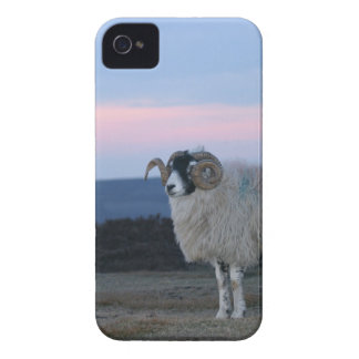 Sheep i Phone 4/4S Case-Mate Barely There