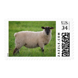 Sheep in a Grasss Field Postage