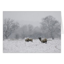 Sheep in a snowy field card