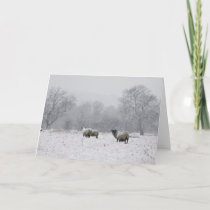 Sheep in a snowy field holiday card