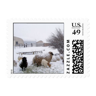 Sheep In April Snow Postage Stamp