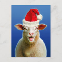 Sheep in christmas fever holiday postcard