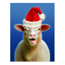 Sheep in christmas fever postcard