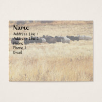 Sheep In Dry Grass Business Card
