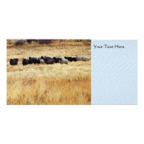 Sheep In Dry Grass Card