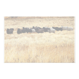 Sheep In Dry Grass Stationery