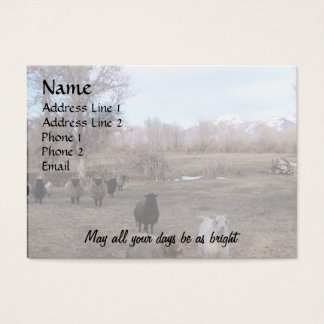 Sheep in Dry Pasture Business Card