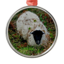 Sheep in hideing on dartmoor metal ornament