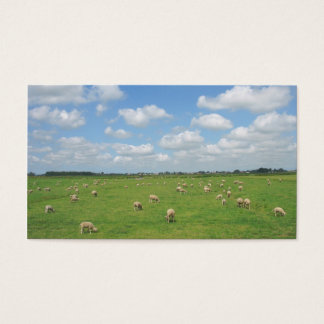 Sheep in Pasture Small Photo Card