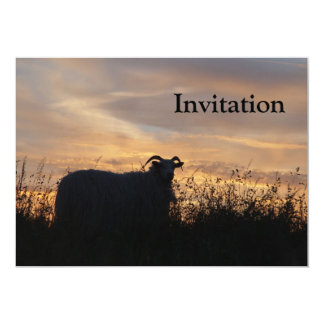 Sheep - in silhouette card