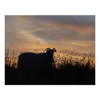 Sheep - in silhouette poster
